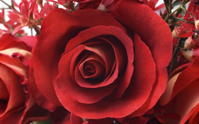 International Womens Day Beautiful roses at the March 8 014485