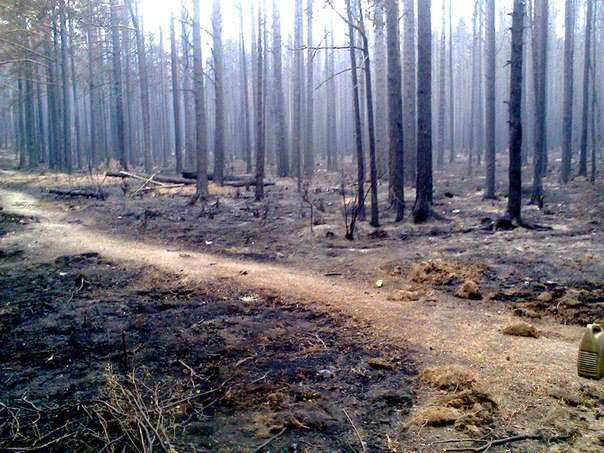 песчанка после пожара