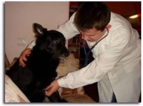 Ветеринарные клиники спб усыпление цена