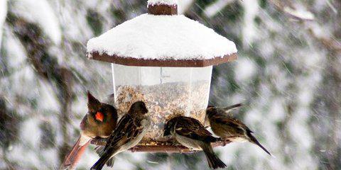 Картинки по запросу кормить птиц зимой