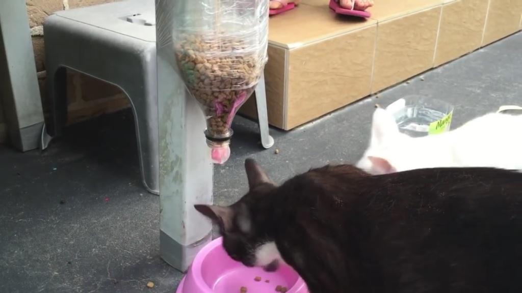 Как сделать кормушку для котов как сделать кормушку для кота