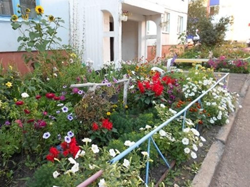 Какие цветы сажают во дворе 32