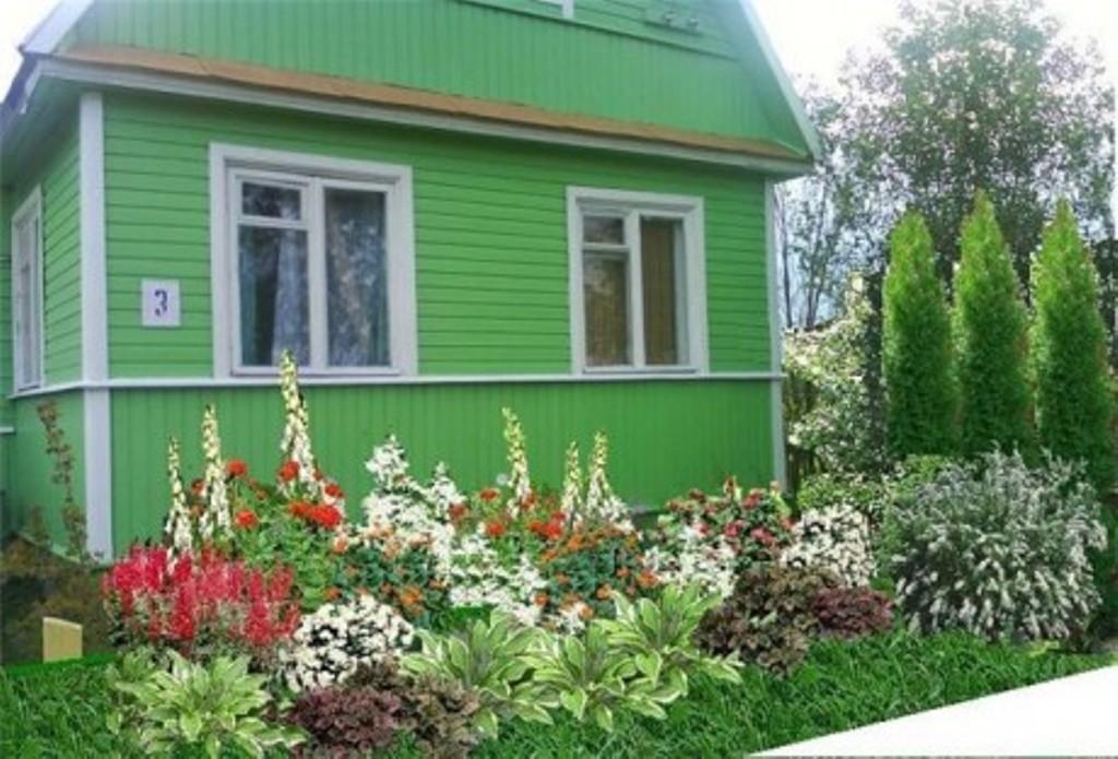 Какие цветы посадить за домом