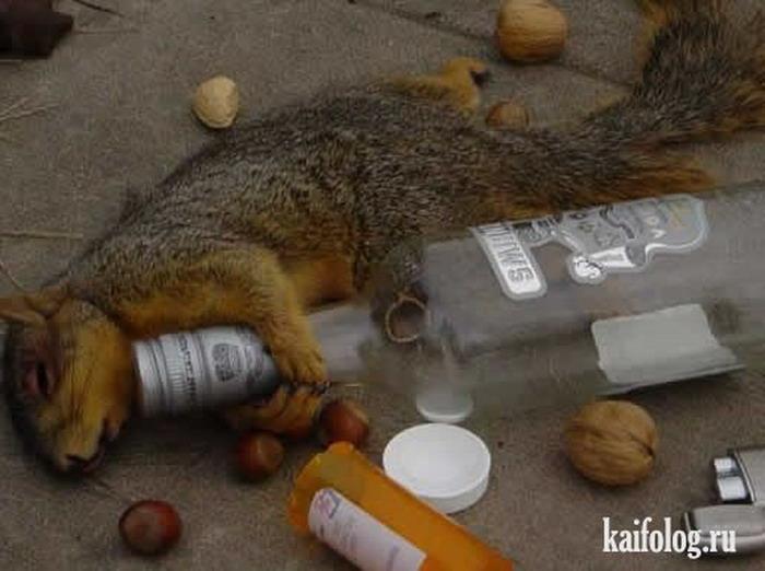 Белочка у алкоголиков что это