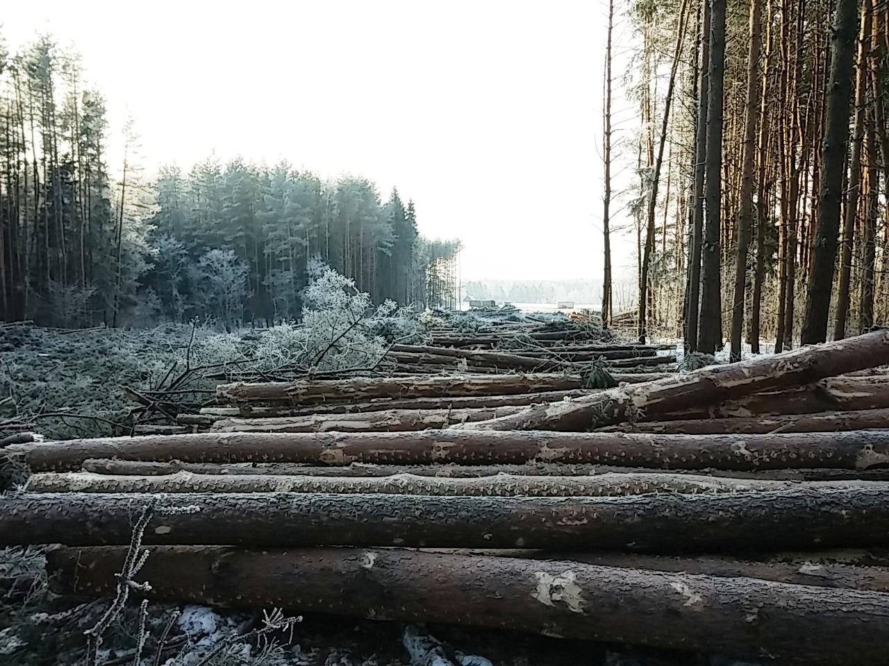 Анкудиново- зима 2015