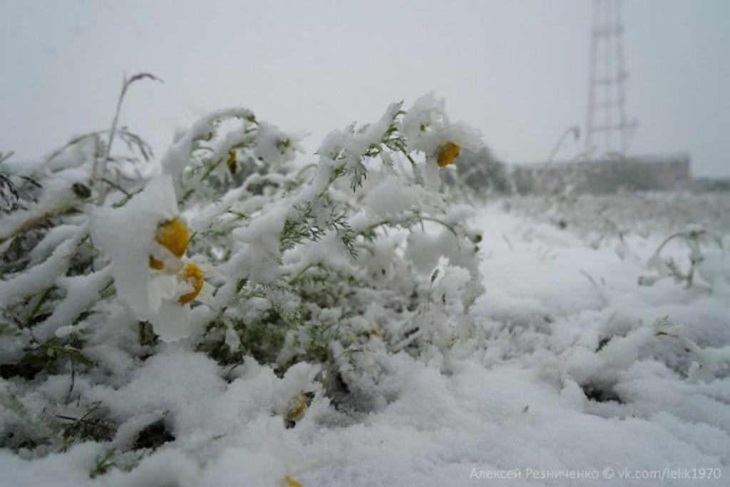 сонник летом снег выпал белый
