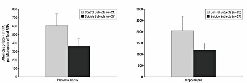 03.BDNF-v-mozge-samoubijc