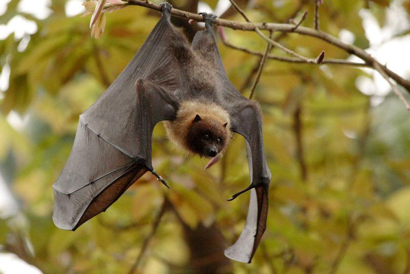 поодаль картинка летучая мышь на дереве рубрике