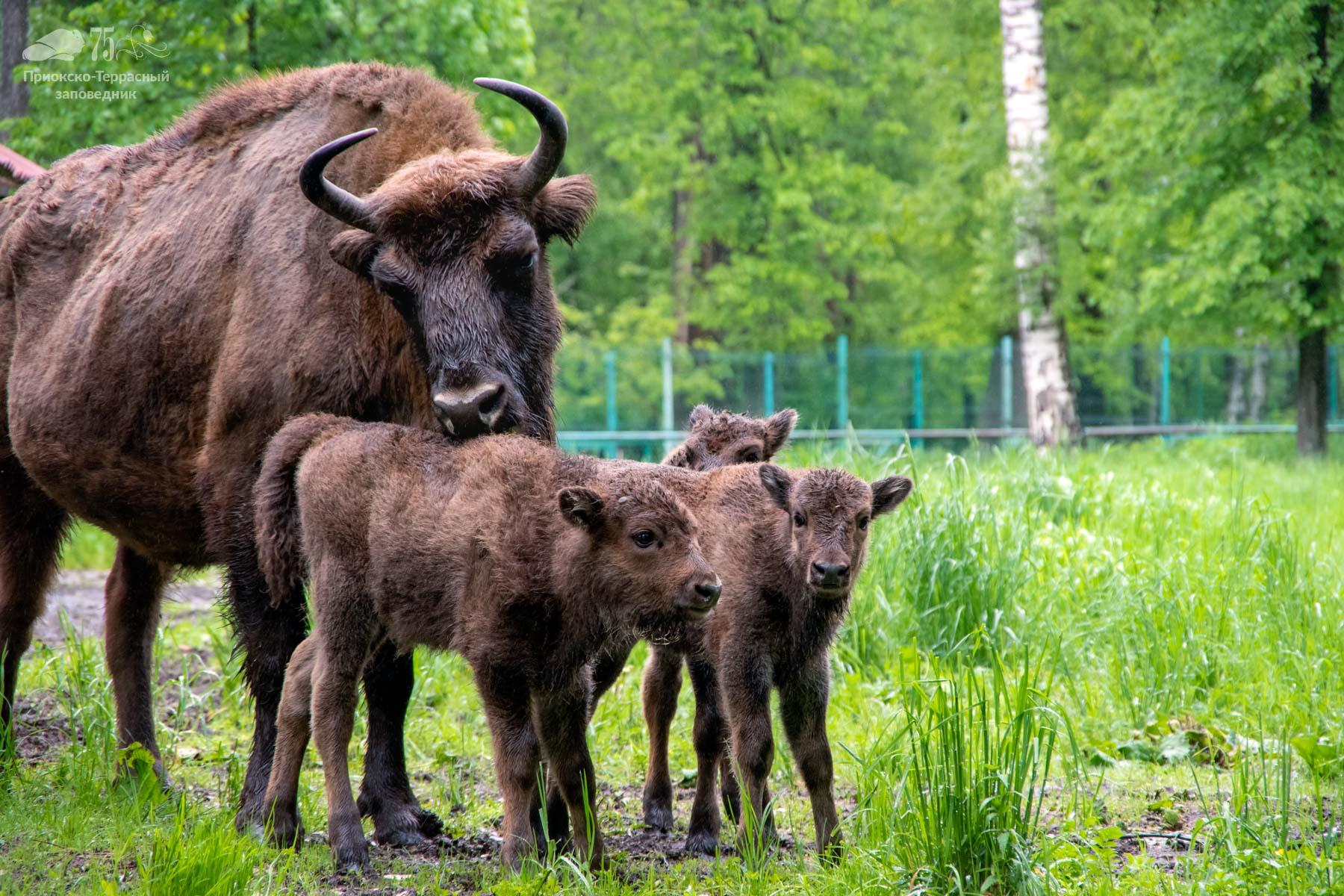 Отличная новость для любителей животных – зубров кормить разрешается! - фото 2