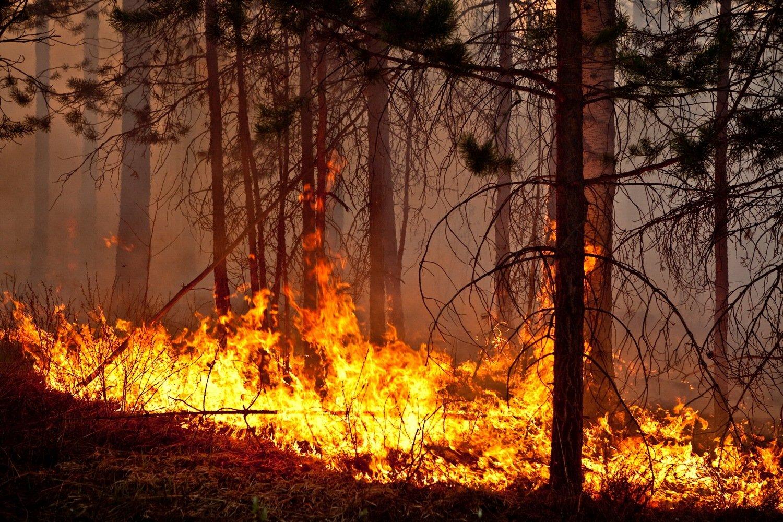 картинка фото пожаров чай