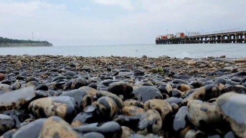 SOS: пляжи Анапы, Геленджика и Тамани загрязнены нефтепродуктами - фото 1