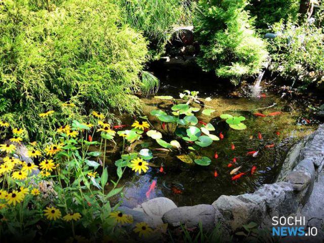 Процветающий зеленый уголок Сочи «Фитофантазия» - дань памяти Сергею Венчагову - фото 1