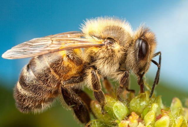 «Раздаются мрачные прогнозы об исчезновении к 2035 г. популяции пчел в мире в целом» - Интервью - фото 2