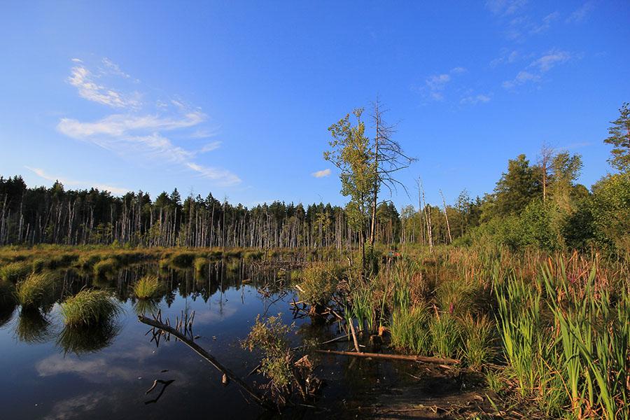 картинки водно-болотных угодий хранит