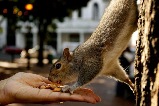 Кто кормит животных в парках, закрытых на период действия особого режима в Москве? - фото 1
