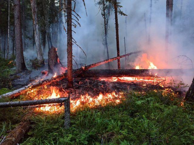 Борьба с пожаром в заповеднике «Денежкин Камень» все еще продолжается - фото 1