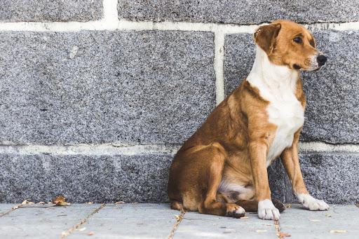 Приют для животных будет построен на севере Москвы - фото 1