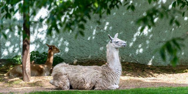 Московский зоопарк откроется 16 июня - фото 3