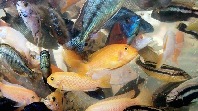 Россельхознадзор отменил ограничения на ввоз живой рыбы из Китая - фото 1