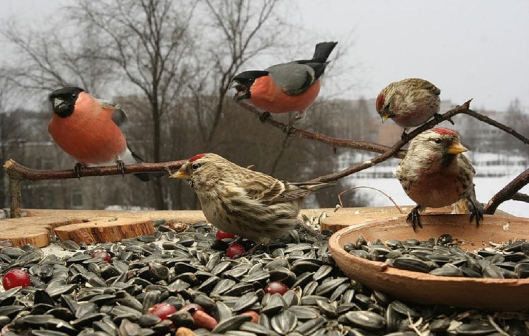 шею покормить птицу картинка этом